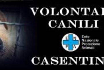 Canile del Casentino, pronto il calendario 2018